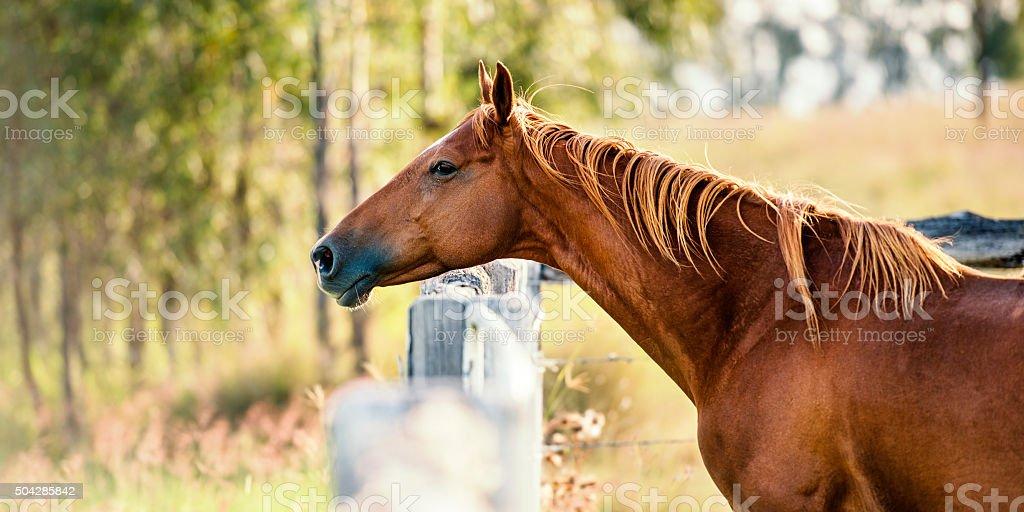 Single horse stock photo