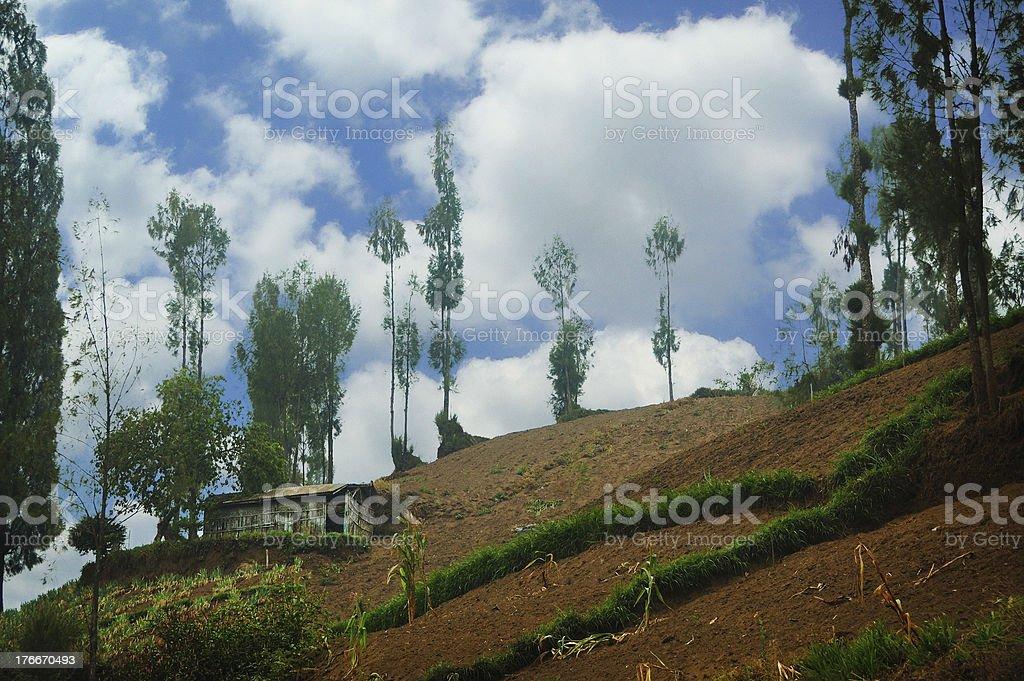 Single house on sloping plain beside trees royalty-free stock photo