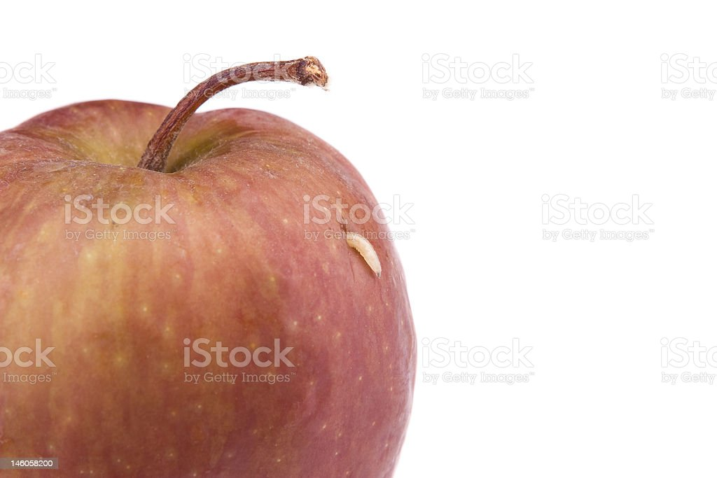 Single Maggot Comes Out From The Apple Stock Photo Download Image Now