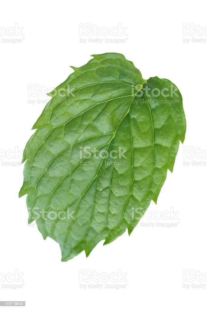 Single mint leaf royalty-free stock photo