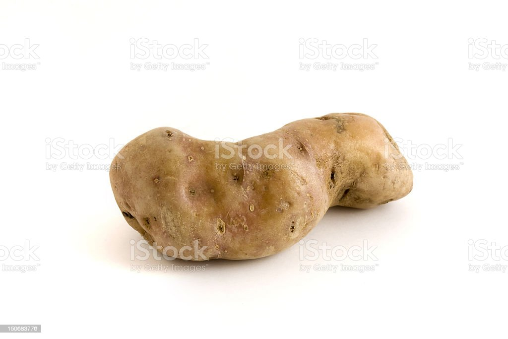 single misshapen potato over white stock photo