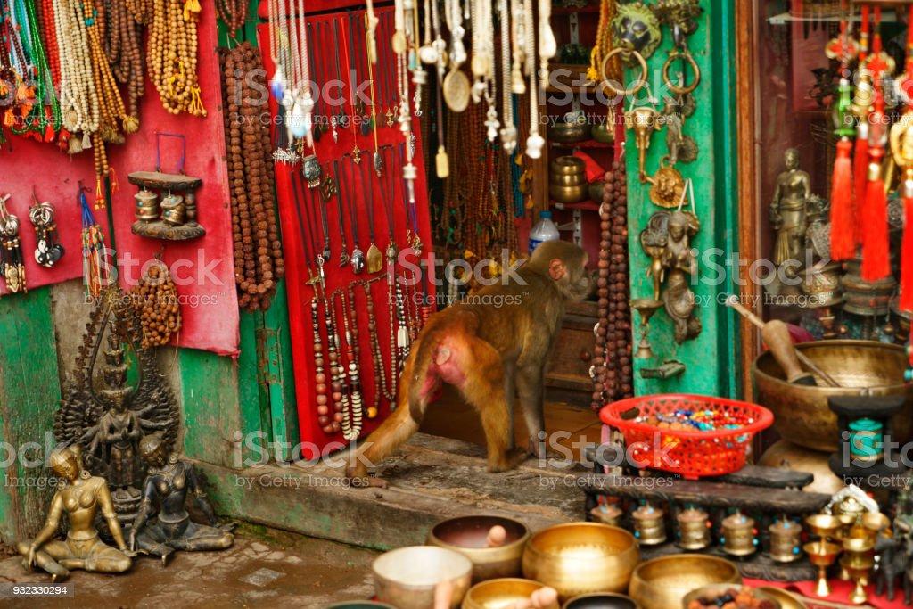 single monkey entering nepalese souvenir shop at Swayambhunath temple Kathmandu stock photo
