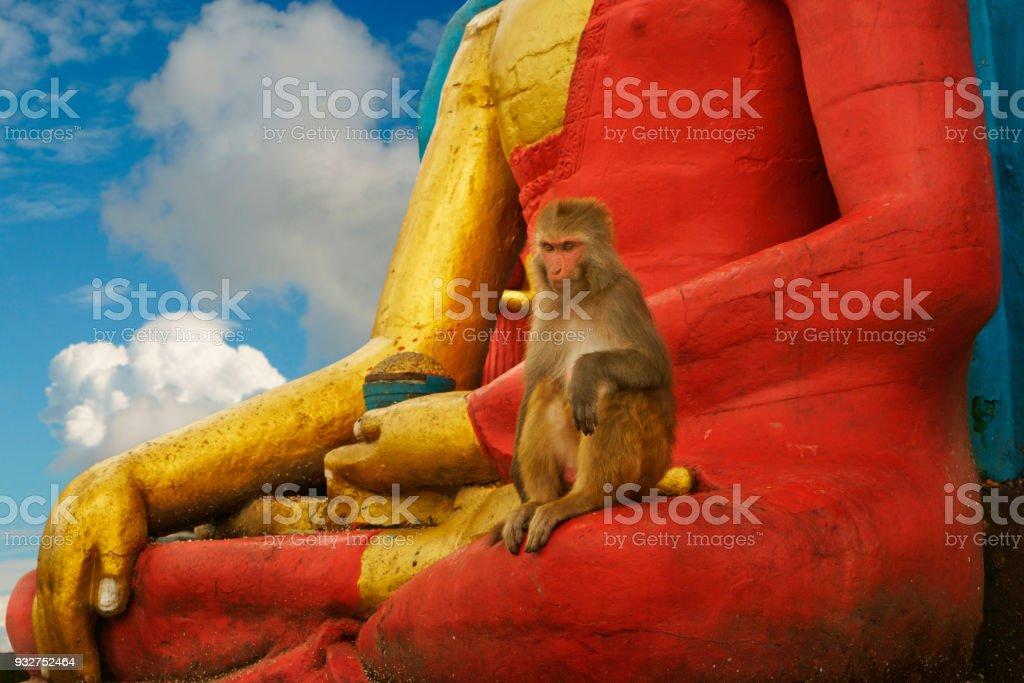 single monkey on red golden buddha statue at Swayambhunath temple stock photo