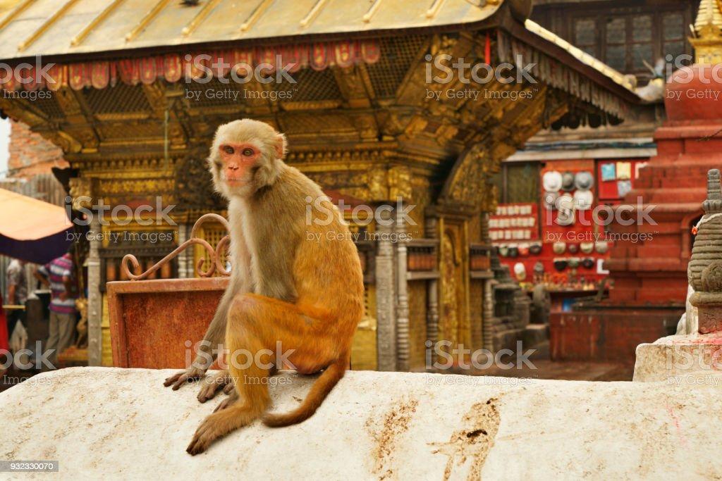 single monkey sitting at stupa of Swayambhunath temple Kathmandu stock photo