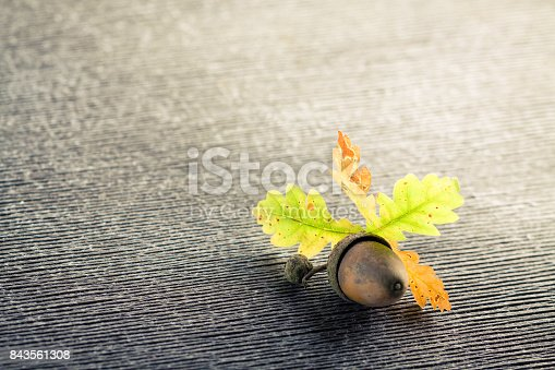 istock Single oak acorn and leaves on gray wooden cracked background. 843561308