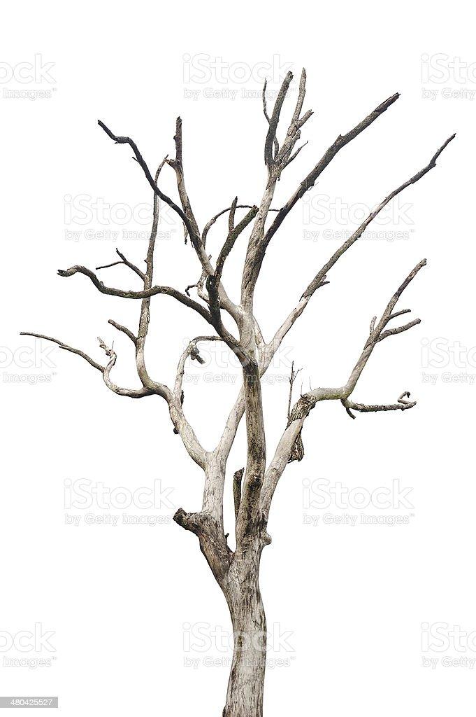Simple vieux et arbre mort isolé - Photo