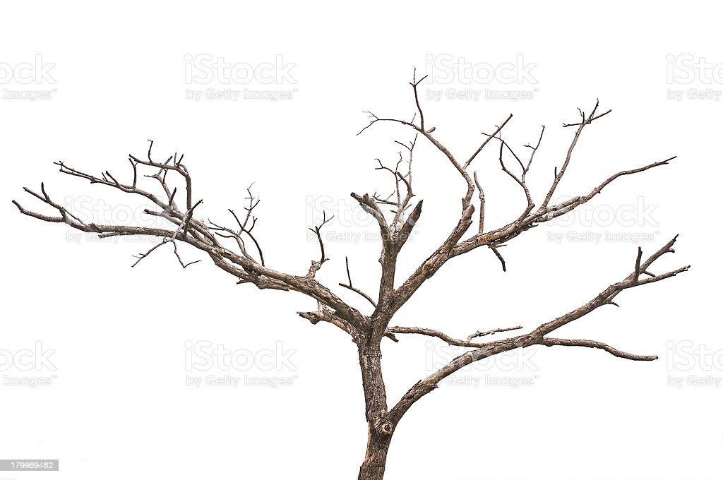 Simple vieux et arbre mort - Photo