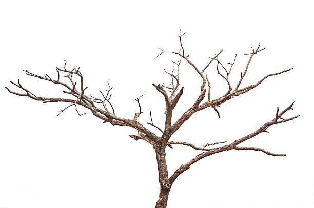 Simple vieux et arbre mort - Photo