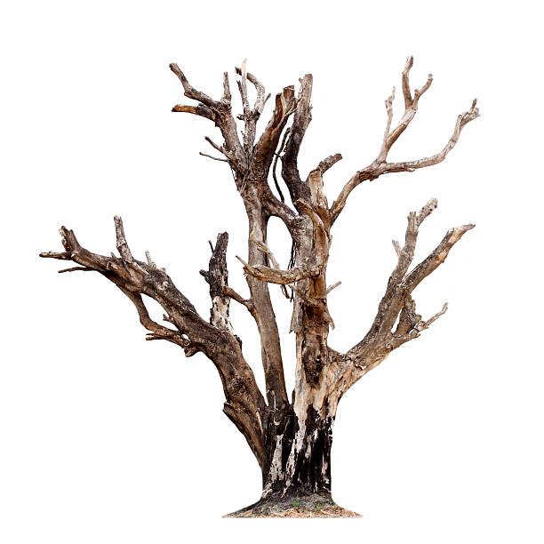única árvore velha e morta - planta morta imagens e fotografias de stock