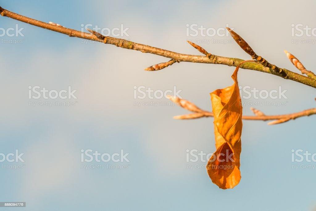 Single orange colored autumn leave on a tree limb stock photo