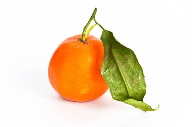 Single orange fruit with a leaf stock photo