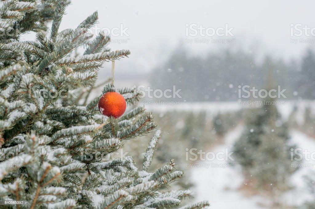 Single Ornament stock photo
