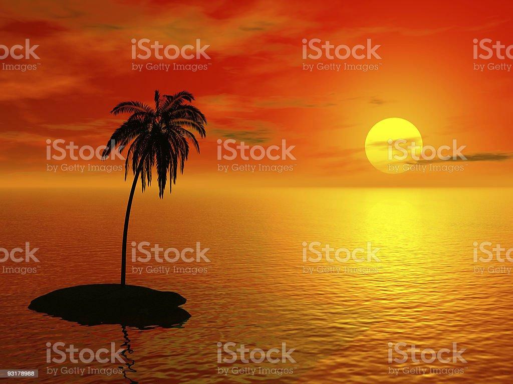 single palm royalty-free stock photo