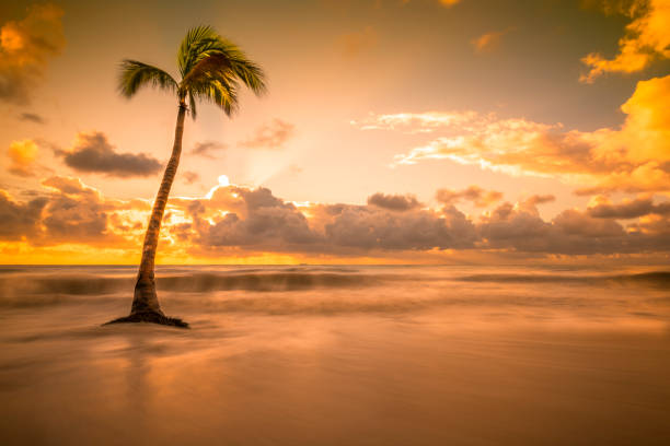 Single Palm Tree on the Beach with Single palm tree standing on the beach with crashing waves around it. The sun is about to peak above the clouds. naya rivera stock pictures, royalty-free photos & images