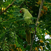 parrot sitting in a branch