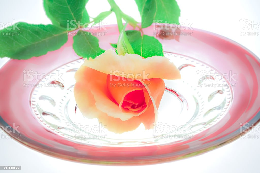 Single peach rose sits on antique ruby glass plate (P) stock photo
