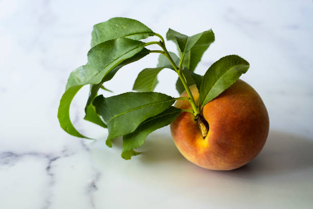 Single Peach with Leaves on Marble Surface stock photo