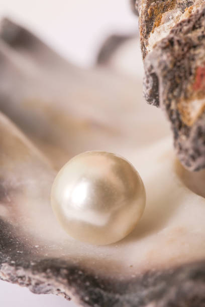 single pearl in an oyster shell - mother of pearl stock photos and pictures