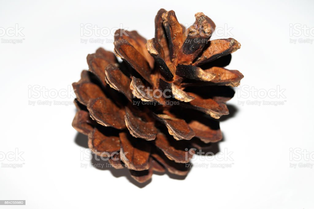 Single pine cone isolated on a white background royalty-free stock photo