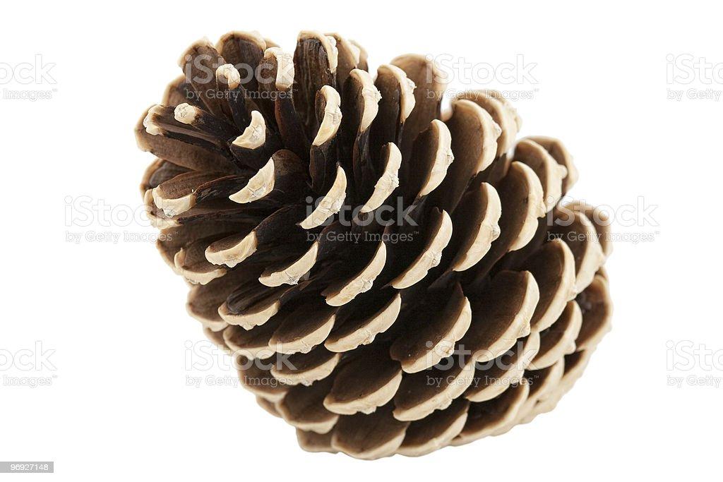 single pine tree cone royalty-free stock photo