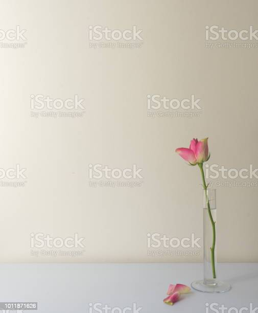 Single pink rose in glass vase on white table picture id1011871626?b=1&k=6&m=1011871626&s=612x612&h=jefzsqh1sdyrd1z6fx3sksytusfw4oaz6mjjq7ndqek=