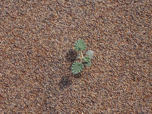 Einzelne Plant – Foto