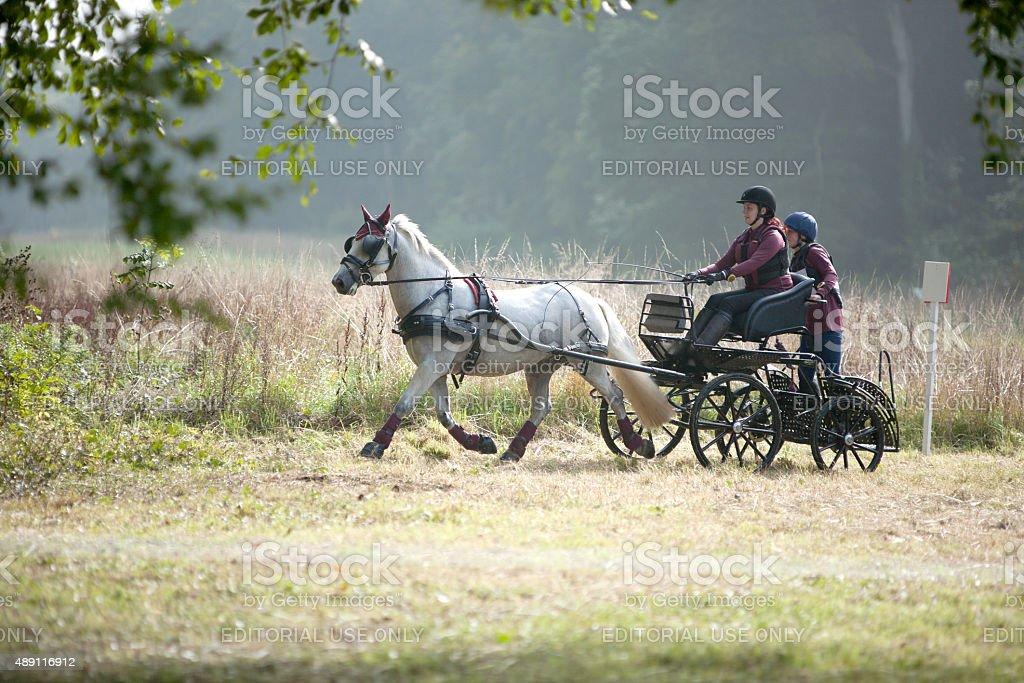 Single Pony Carriage team stock photo