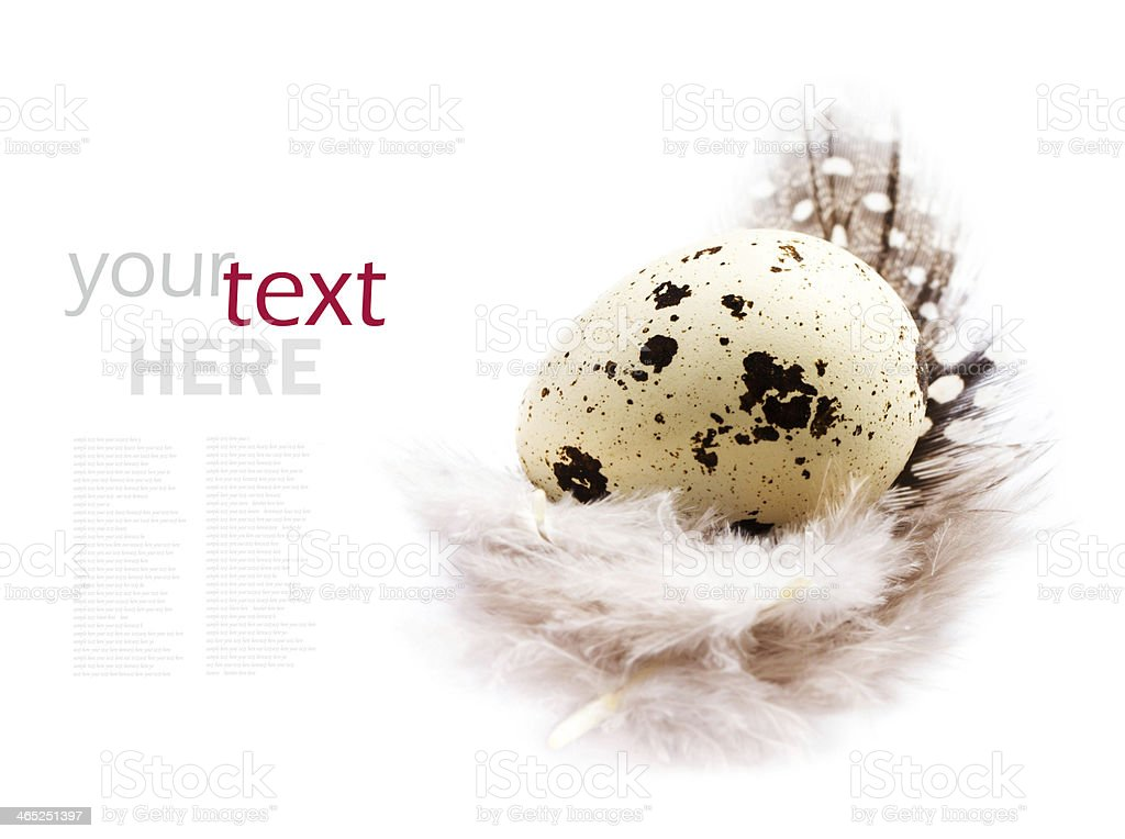 Single Quail egg with white feather isolated royalty-free stock photo