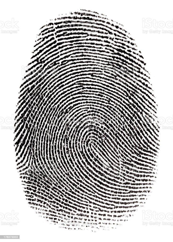 Single real fingerprint on white background royalty-free stock photo