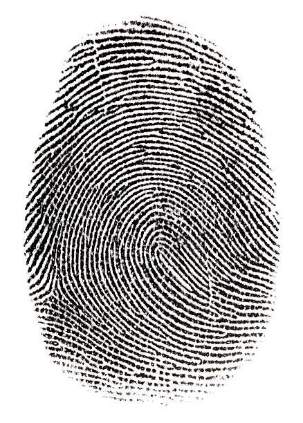 single real fingerprint on white background - fingerprint stock photos and pictures