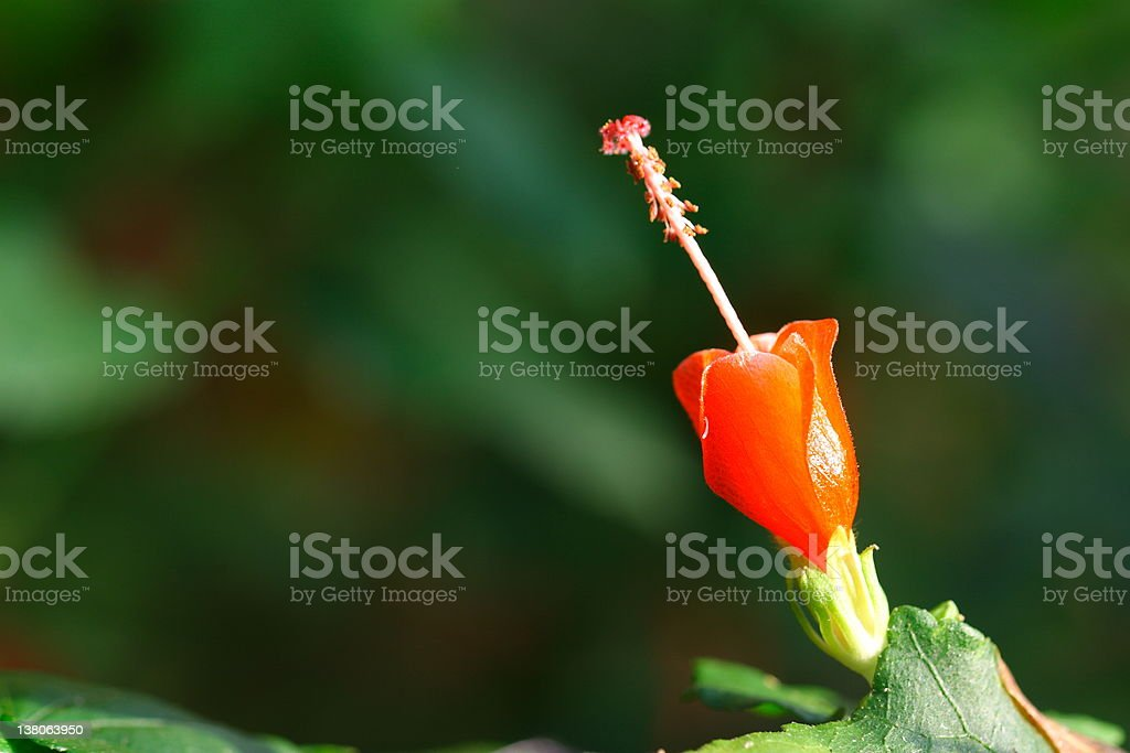 single red flower stock photo