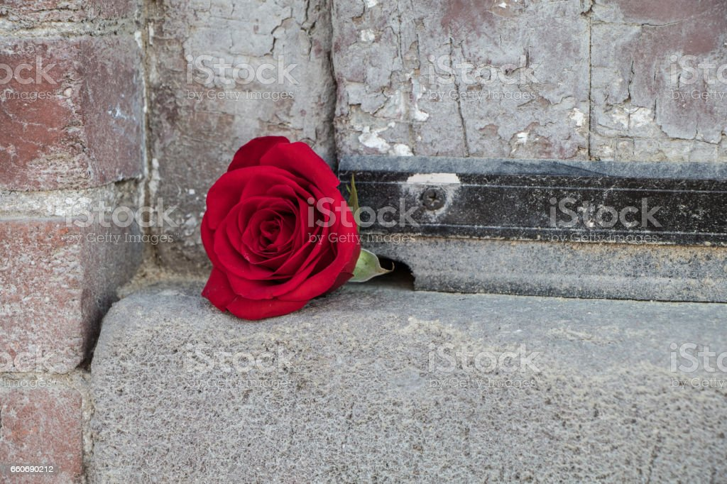 Single red rose against rough dull brick wall stock photo