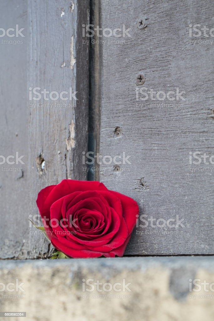 Single red rose against rough dull wooden door stock photo