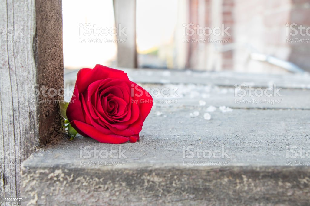 Single red rose against rough dull wooden platform stock photo