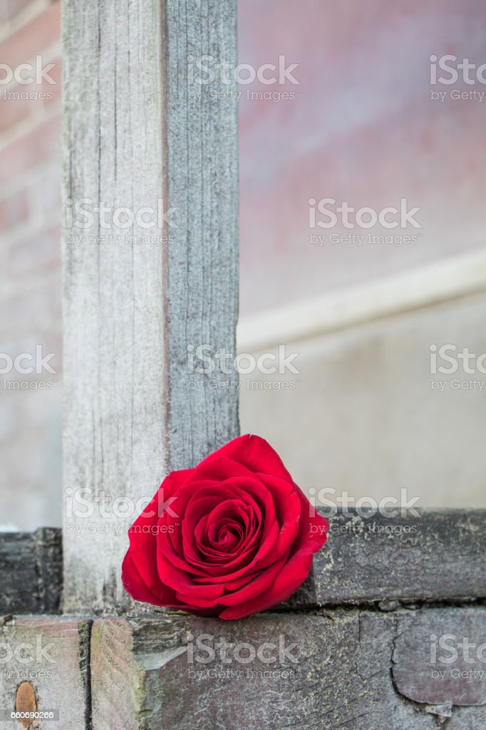 Single red rose against rough dull wooden post and platform stock photo