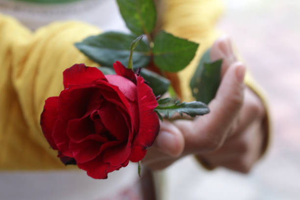 Single red rose in hand picture id1278852025?b=1&k=6&m=1278852025&s=612x612&w=0&h=d25i9sy9hh2viug8xikdnkaq0pc9jwdgjkp2pry fva=