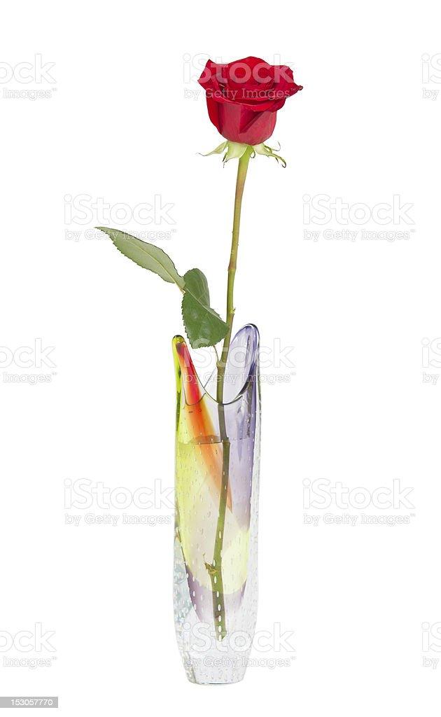 une seule rose rouge dans un vase photos et plus d 39 images de amour istock