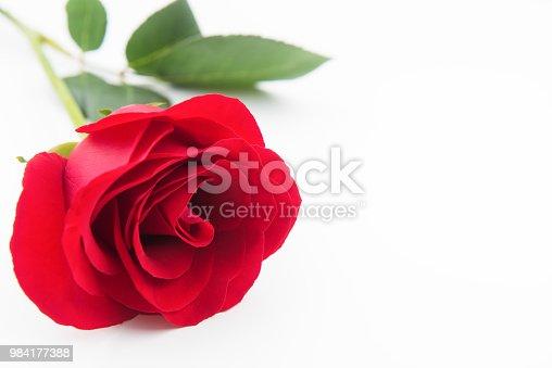 Rose - Flower, Single Rose, Flower, Single Flower, Petal