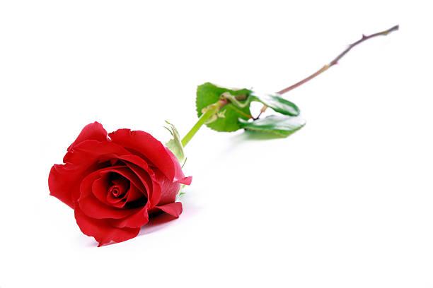 Single red rose picture id176002558?b=1&k=6&m=176002558&s=612x612&w=0&h=oo5kkmz vdfoqglmqjkcr4fr5mehkqtrmlmodkjizdo=