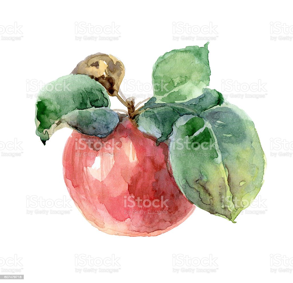 Single red watercolor apple stock photo
