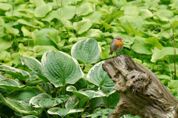 Einzelne irgendwo auf einem Baumstamm vor grünem Hintergrund – Foto