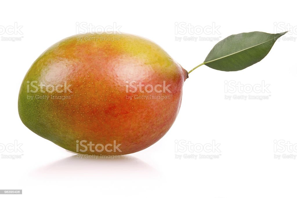 A single, ripe mango fruit with a leaf royalty-free stock photo