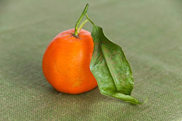 Single ripe orange on green napkin stock photo