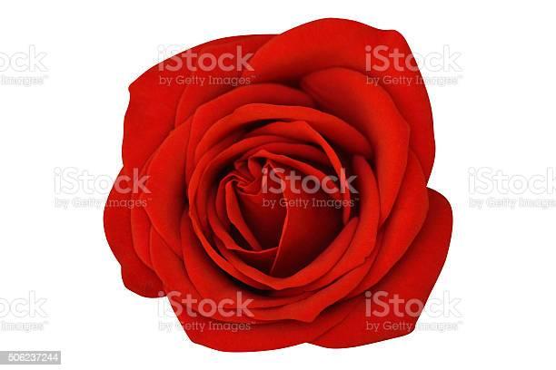 Single rose isolated on white background picture id506237244?b=1&k=6&m=506237244&s=612x612&h=ahvxt4wfi5i 2ukx5zyrsbpsaezsuuqxzm1thilenfi=