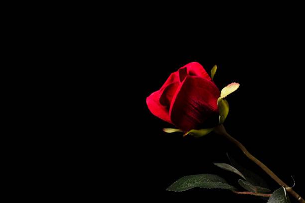 Single rose picture id1124400701?b=1&k=6&m=1124400701&s=612x612&w=0&h=vvfrhempx exg7uap 2xb35wjfzs5gdf5f6v6ikxm38=
