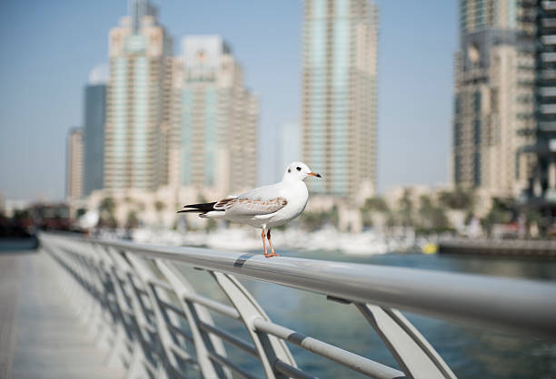 single seagull against skyscrapers stock photo