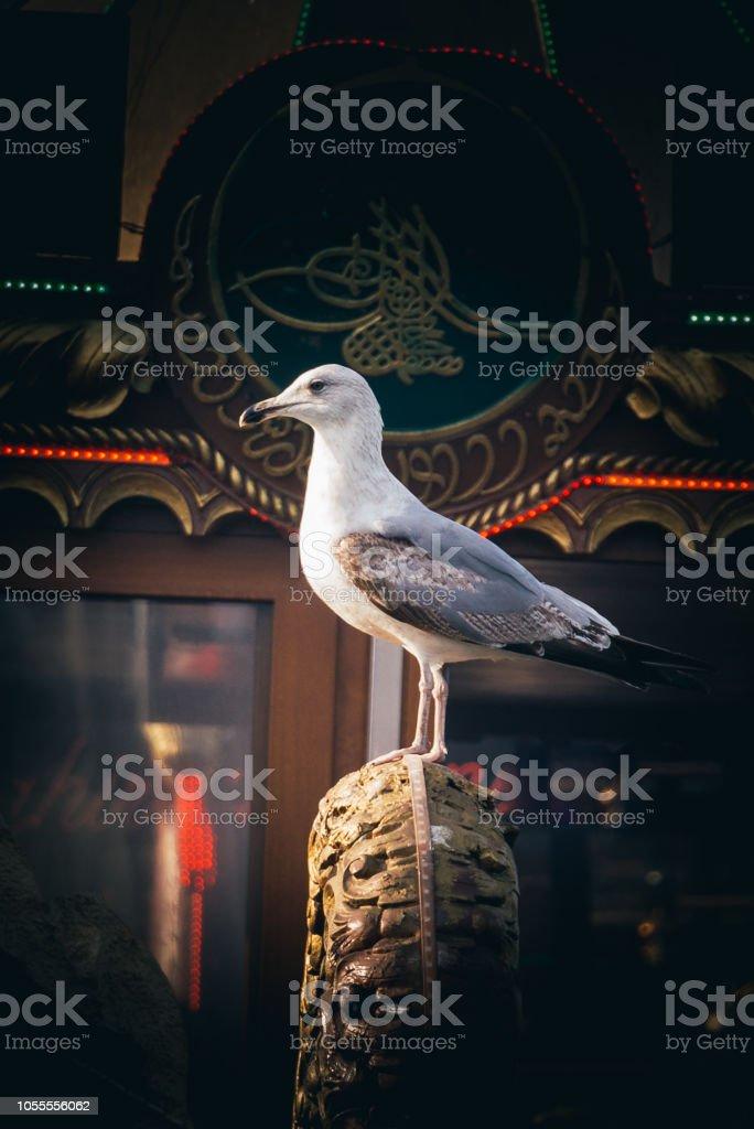 Martı vahşi deniz kuş görünümünde tek stok fotoğrafı