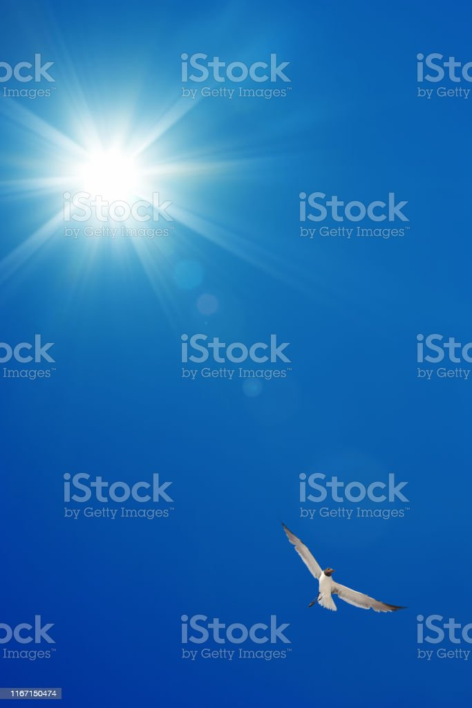 single seagulls flying over clear blue sky with sunbeam