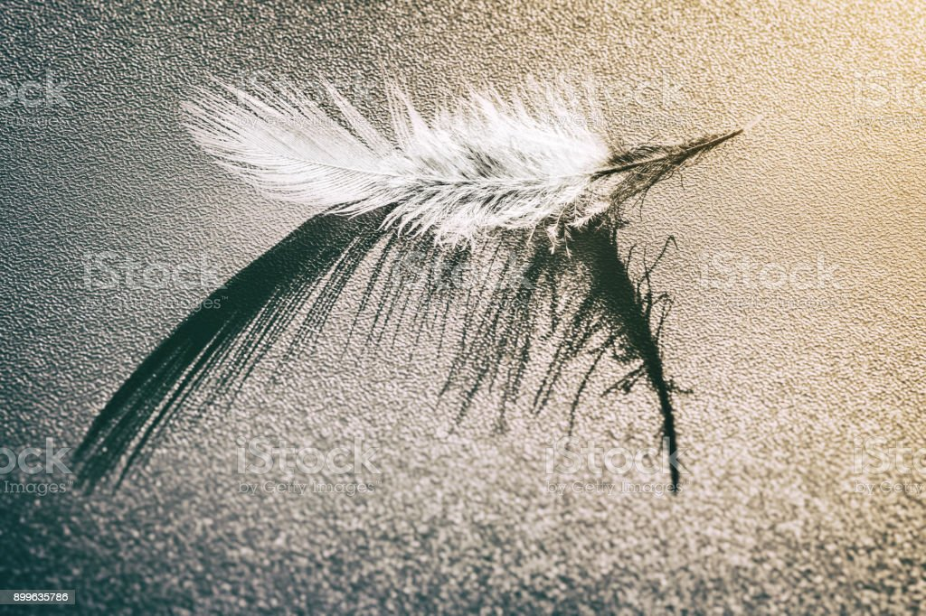 Single small fluffy white feather with its curved shadow placed on grainy abstract background stock photo