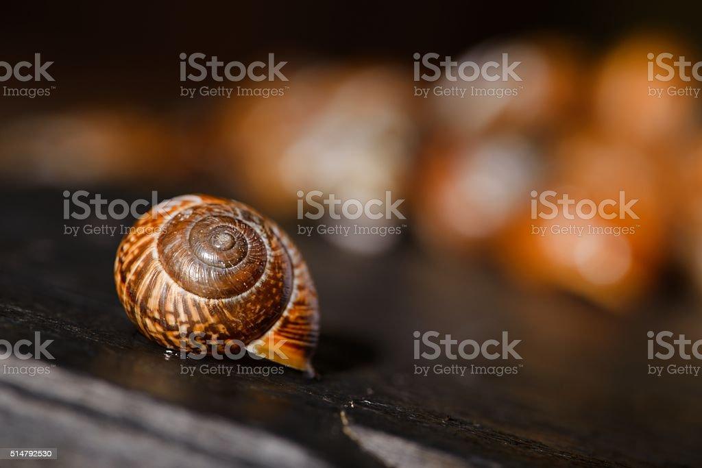 Single snail shell on black stone next to others stock photo